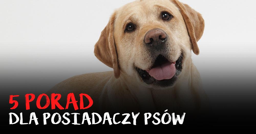 5 porad, które musisz znać jeśli masz psa