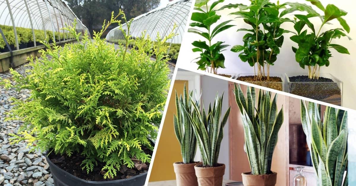10 roślin, które warto mieć w domu bo tworzą idealny mikroklimat dla zdrowia