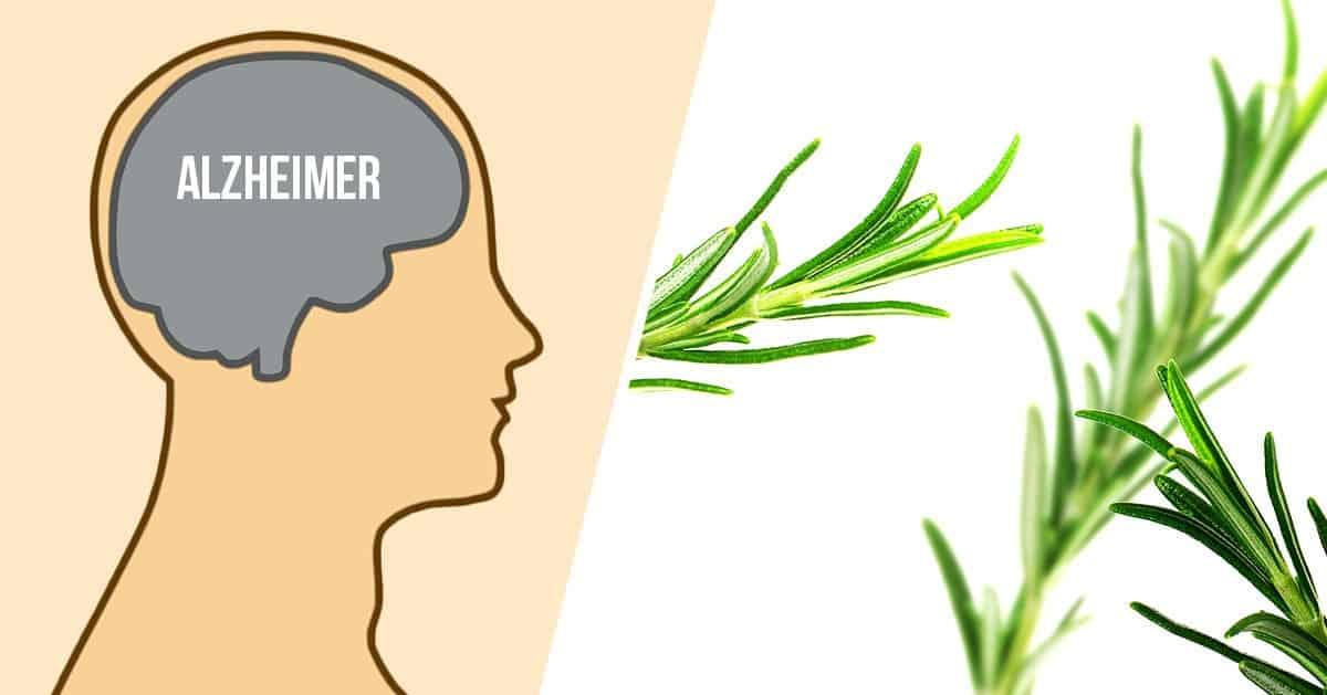 4 zioła, które chronią przed chorobą Alzheimera – zacznij je spożywać