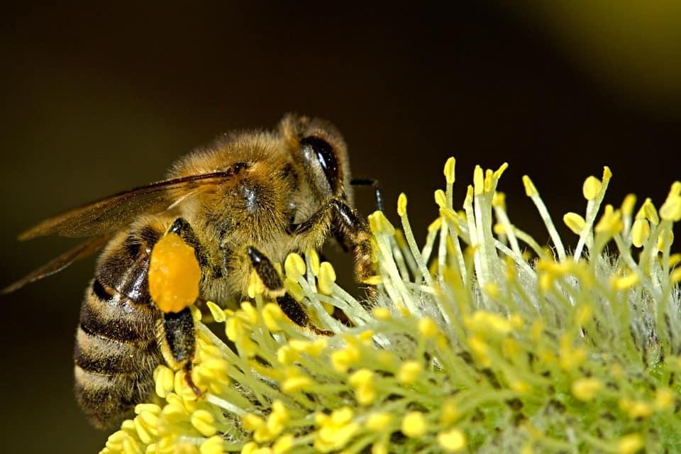 8 niesamowitych faktów o pszczołach, których na pewno nie znaliście
