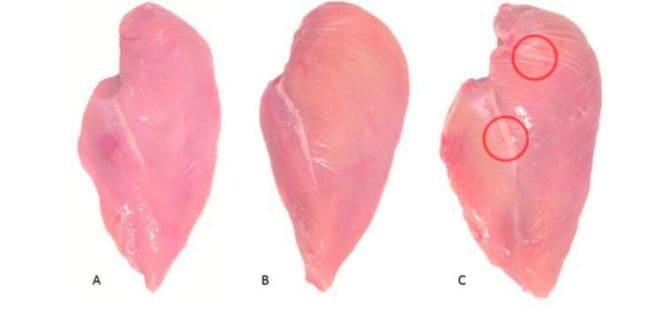 Jeśli zauważysz białe prążki na piersi kurczaka to lepiej jej nie kupuj!