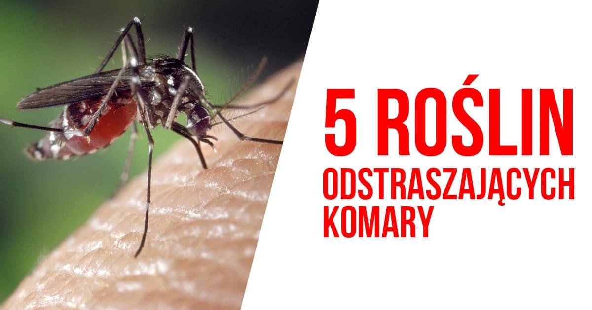 5 roślin, które odstraszą komary