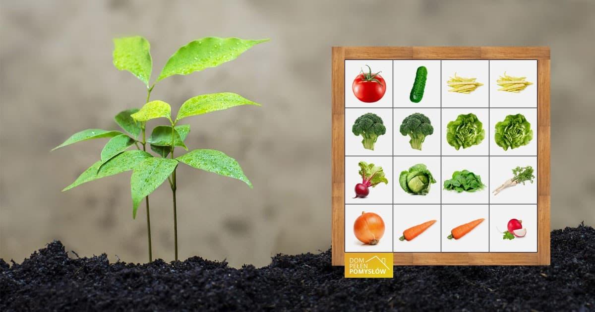 Pomysł na przydomowy ogród z roślinami łatwymi w uprawie
