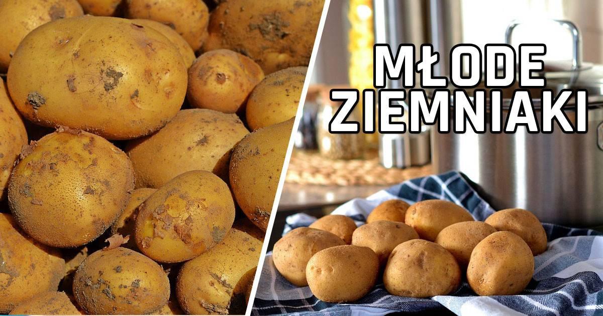 Jedna rzecz o młodych ziemniakach, której nie wiedziałaś