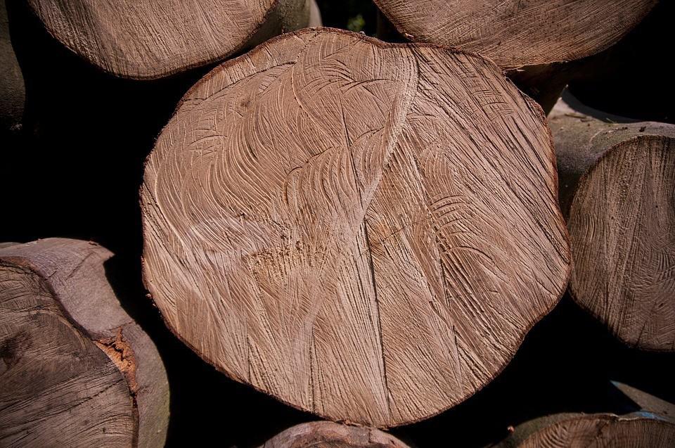 Od dzisiaj wycięcie drzewa na własnej działce będzie trudniejsze