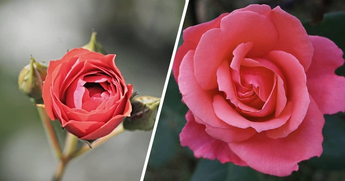DomPelenPomyslow.pl 7 sposobów, dzięki którym kwiaty cięte będą żyły dłużej!