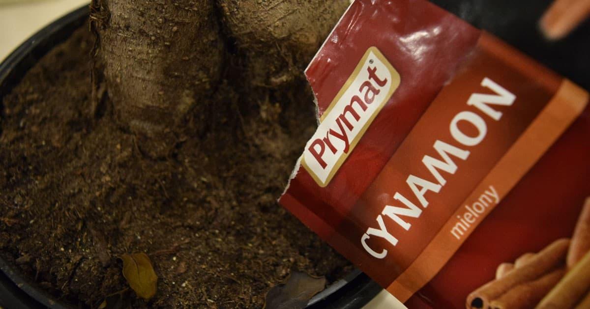 DomPelenPomyslow.pl Posypałam ziemię w doniczce cynamonem - musisz dowiedzieć się dlaczego i zapamiętać ten trik!