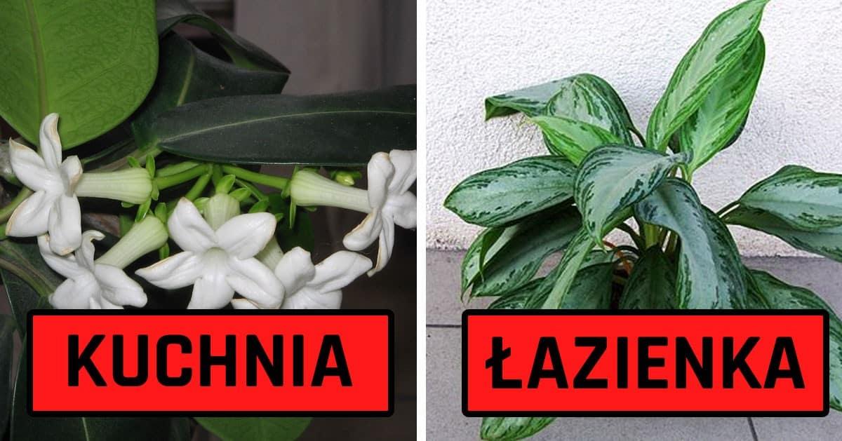 10 roślin idealnych do każdego z pomieszczeń w Twoim domu!