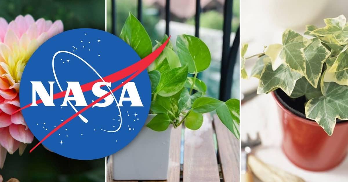 Badacze z NASA wytypowali 15 roślin, które najlepiej oczyszczają powietrze w domu