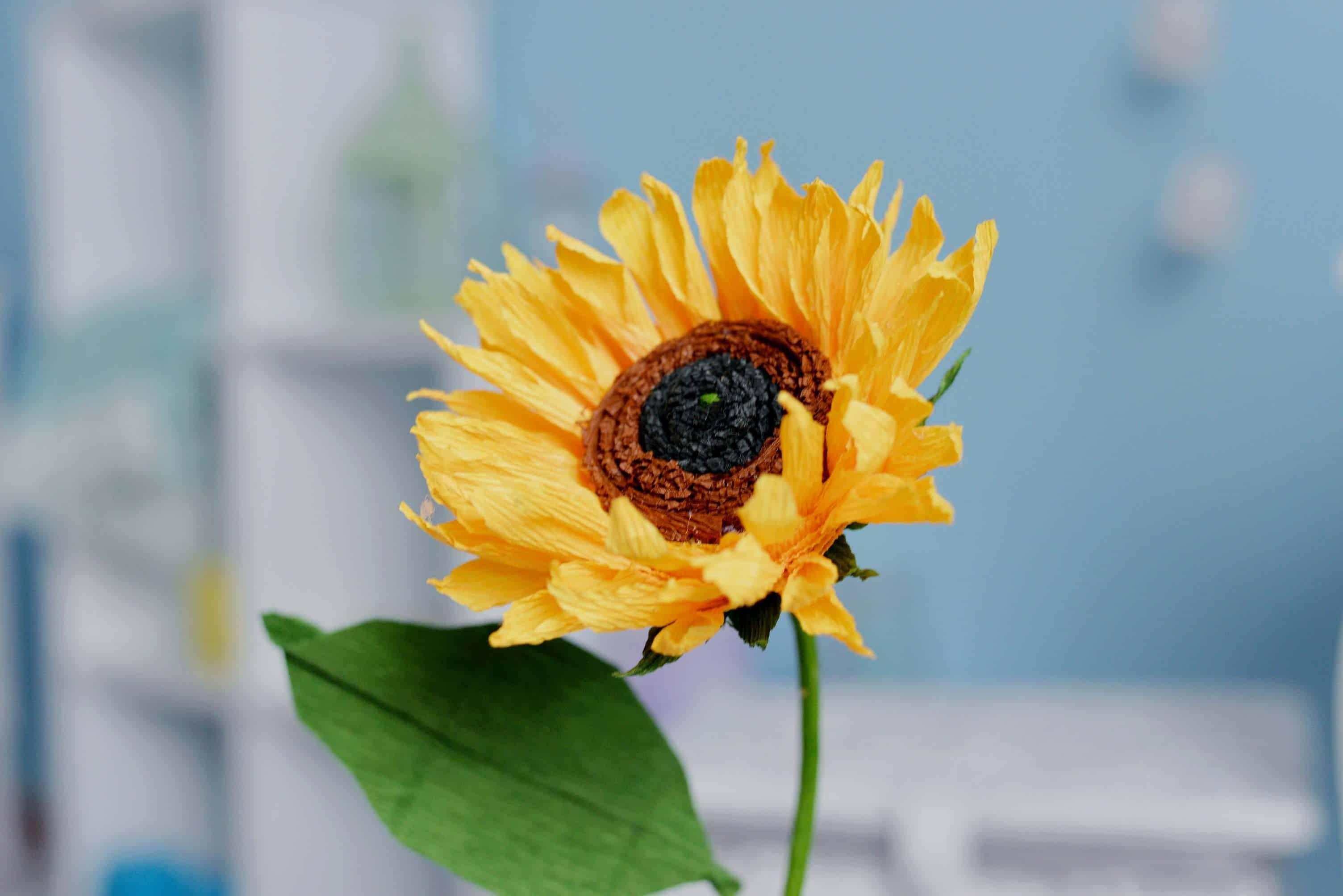Słonecznik z krepiny