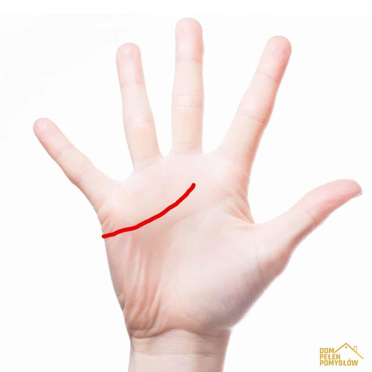 DomPelenPomyslow.pl Spójrz na swoje dłonie i poznaj lepiej swoją osobowość. Linie na nich mówią wszystko!