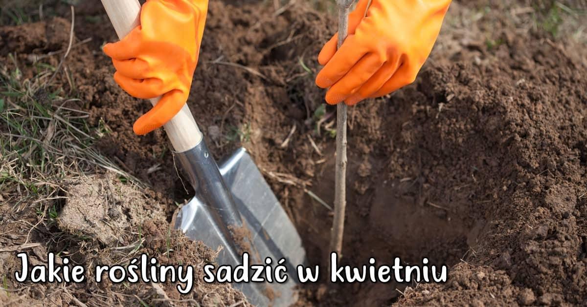 Jakie rośliny można sadzić w kwietniu w ogrodzie