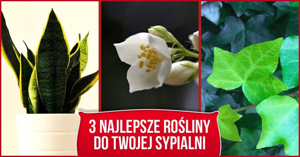 3 rośliny, które powinnaś kupić i wstawić do swojej sypialni!