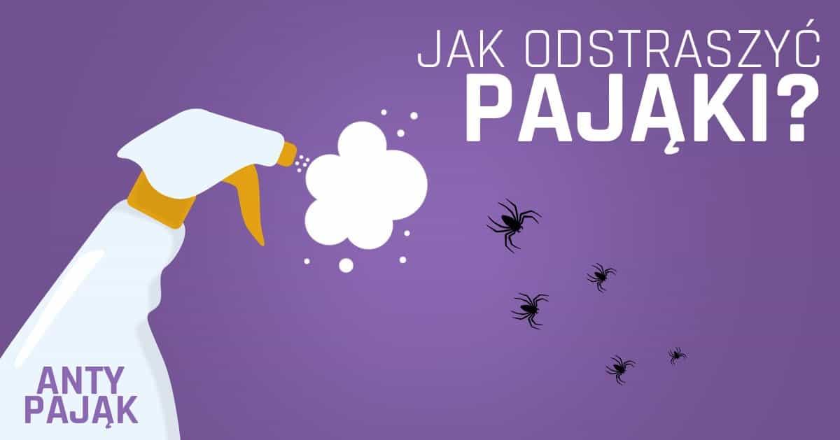 5 rzeczy, które pomogą Ci się pozbyć pająków z domu!