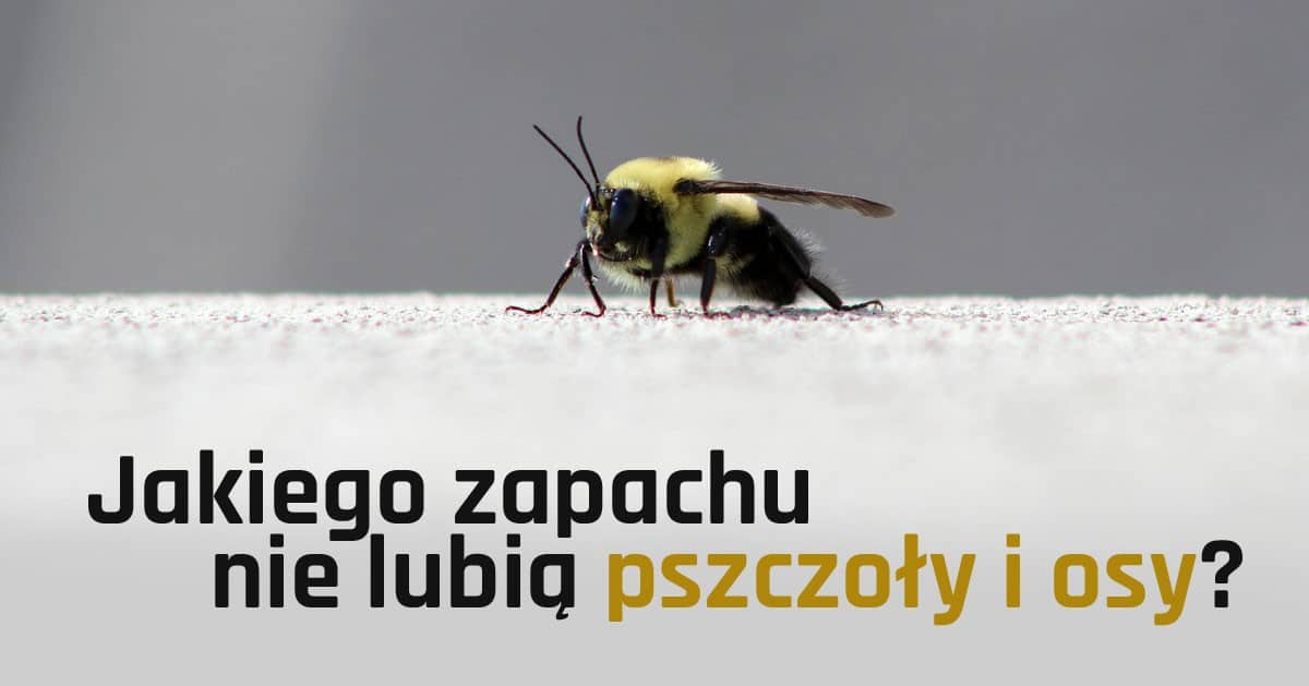 Jakiego zapachu nie lubią pszczoły i osy?