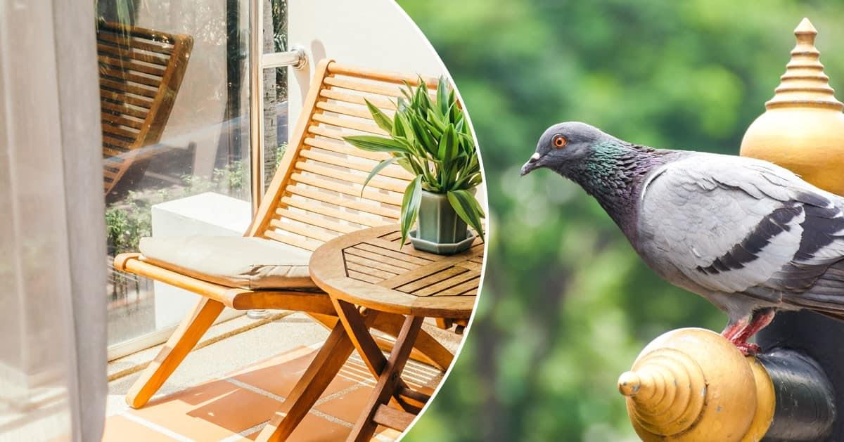Najtańszy i skuteczny sposób na gołębie na balkonie
