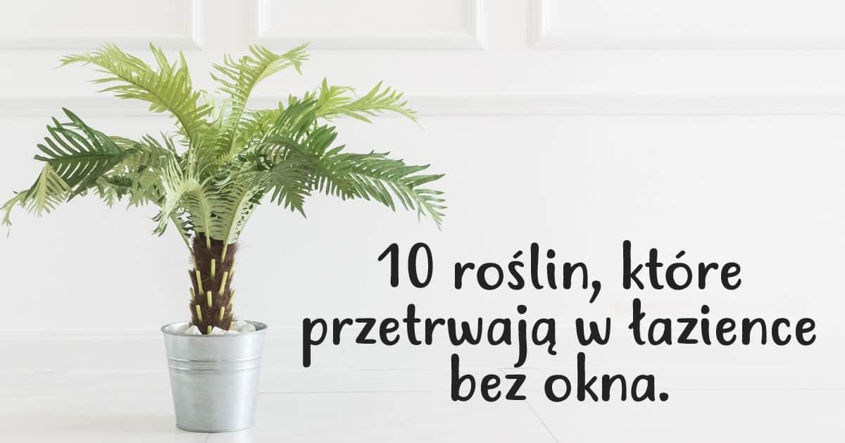 10 roślin, które przetrwają w łazience bez dostępu światła słonecznego