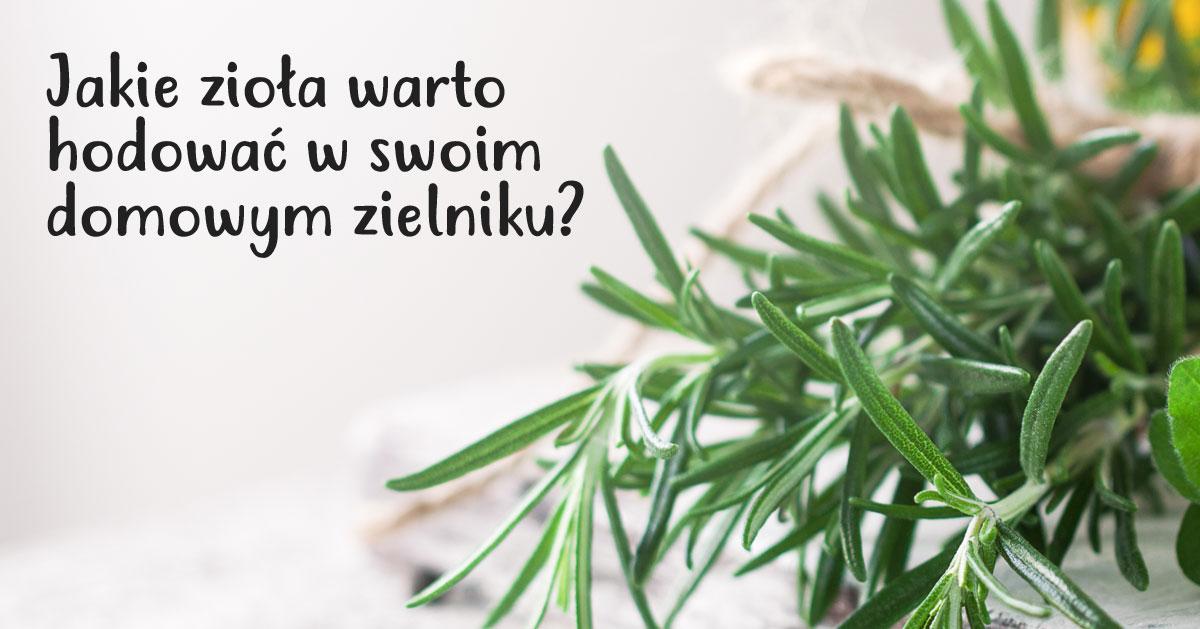 Jakie zioła warto hodować w swoim domowym zielniku?