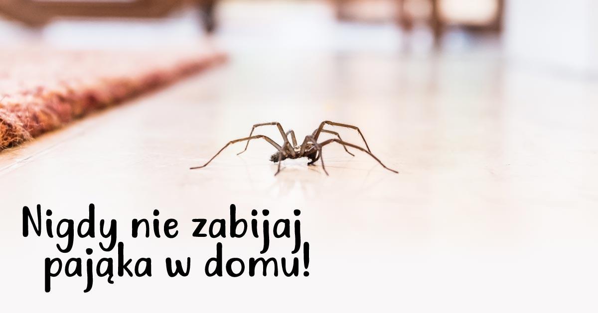 Zobacz dlaczego nie należy nigdy zabijać pająka w domu! Po prostu go wynieś.