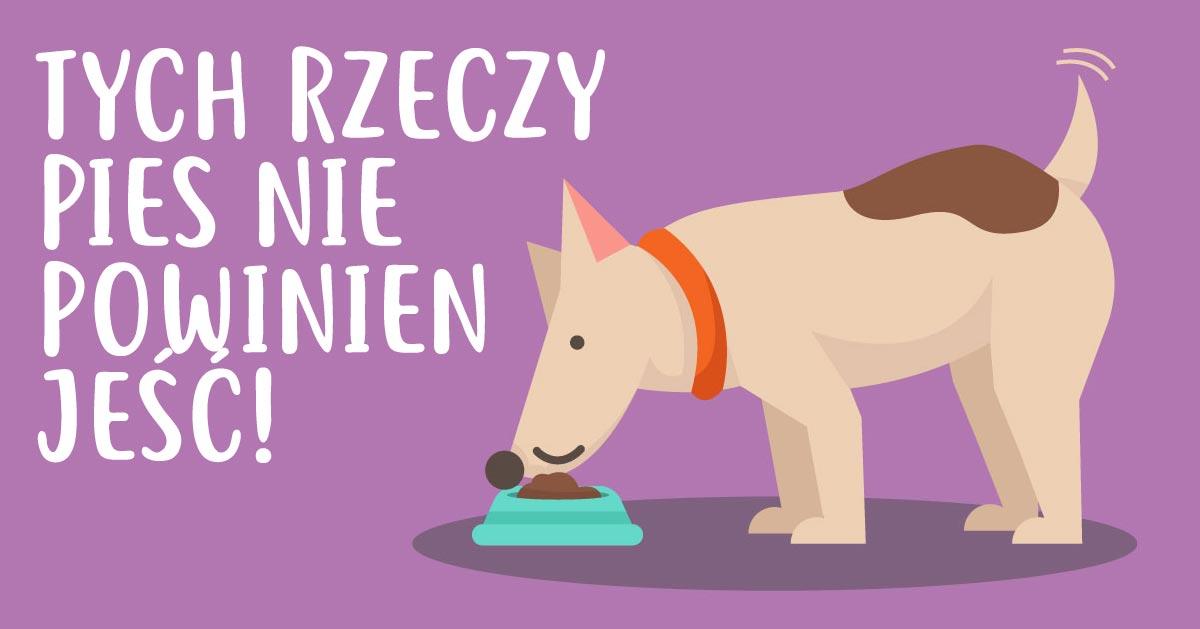 Nigdy nie podawaj psu tych rzeczy do jedzenia. Mogą mu zaszkodzić!