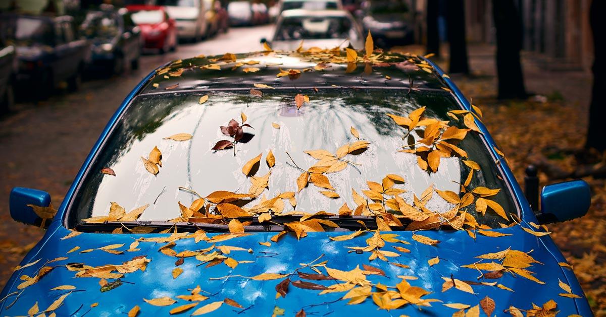 Nie pozostawiaj liści na swoim samochodzie! Zobacz dlaczego.