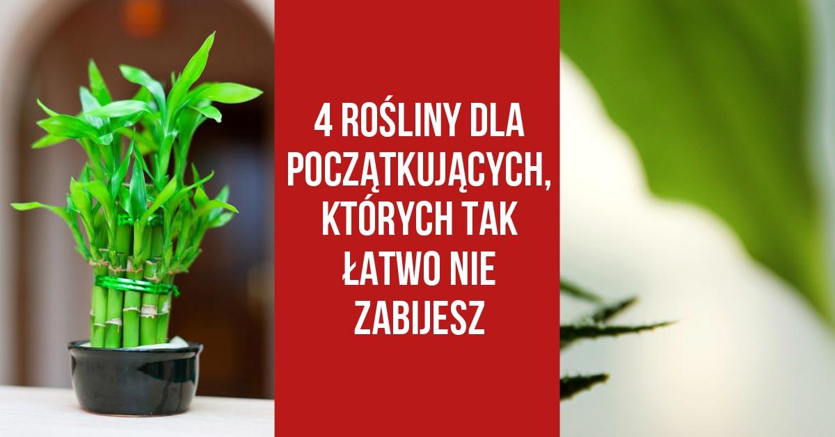 4 rośliny dla początkujących, których tak łatwo nie zabijesz