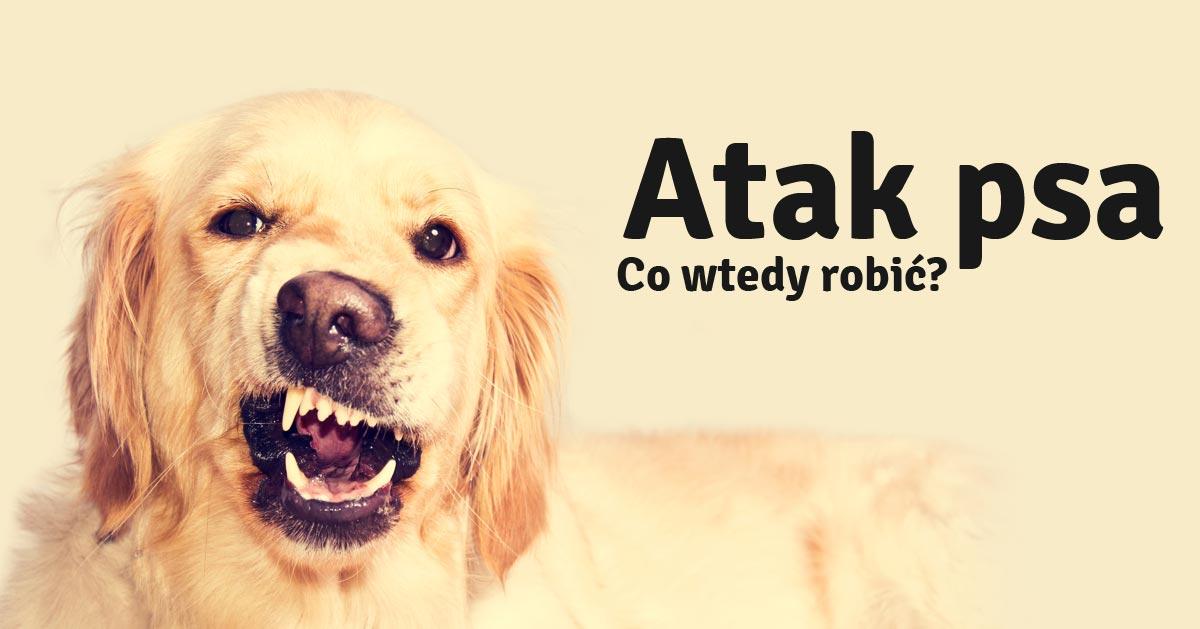 Co zrobić gdy zaatakuje mnie pies?