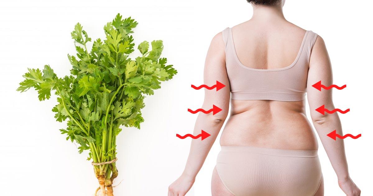 Poznaj moc pietruszki i zobacz jak z nią szybko schudnąć!