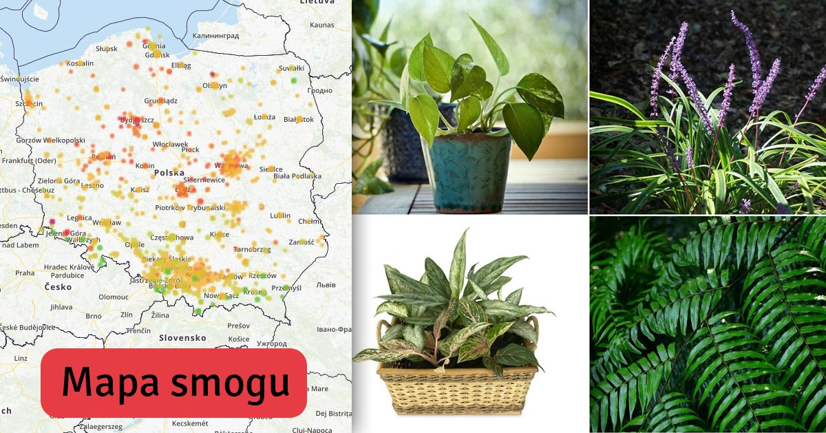 Zobacz jak pozbyć się smogu z domu za pomocą filtrujących powietrze roślin!