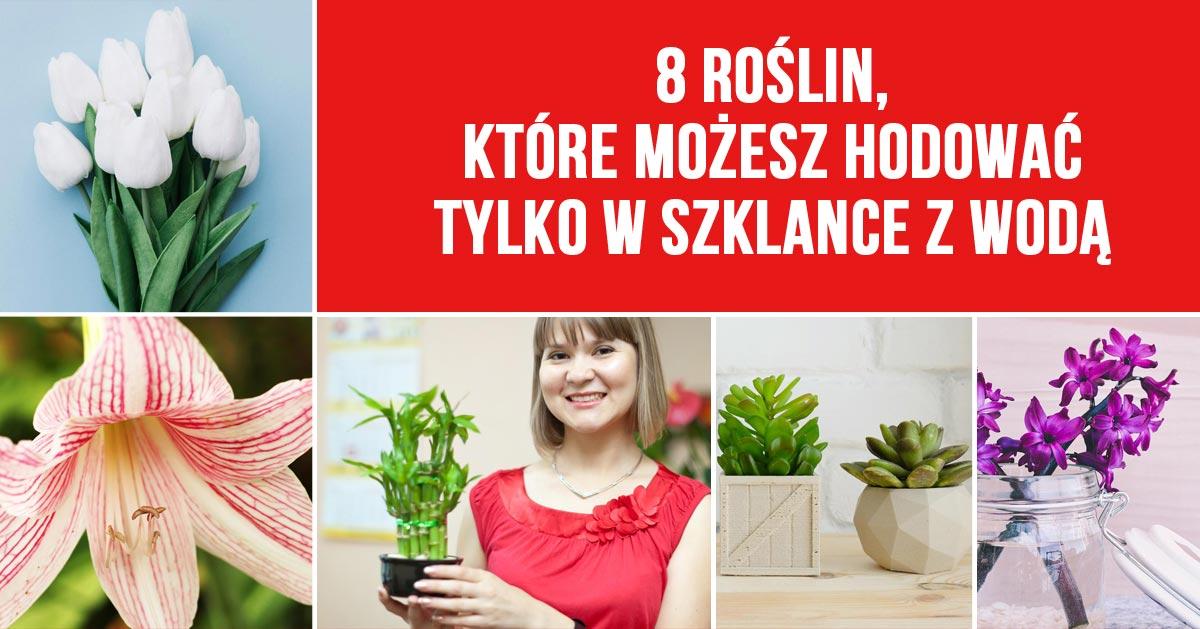 8 roślin, które możesz hodować tylko w szklance z wodą