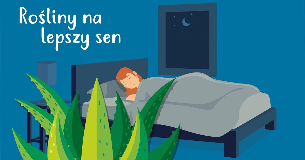 Te rośliny warto mieć w sypialni. Będzie Ci się spało lepiej!