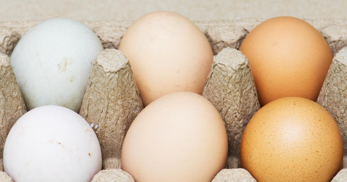 Jeśli jajka, które kupujesz w sklepie są brudne to to przeczytaj!
