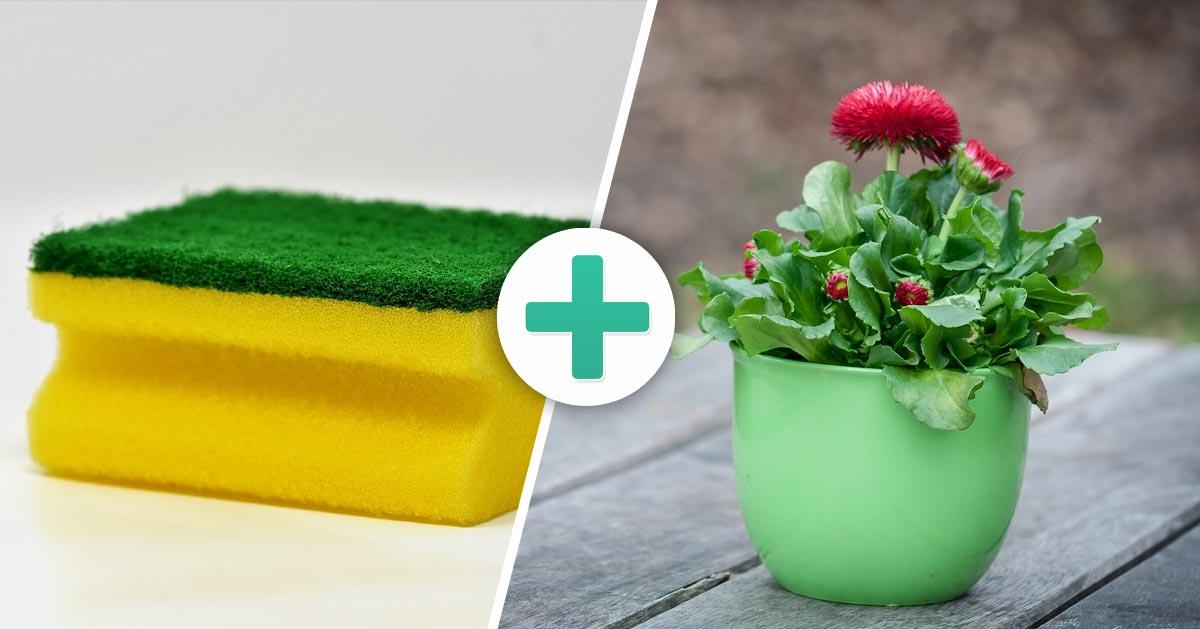 Masz kwiaty w domu? Wypróbuj te triki!