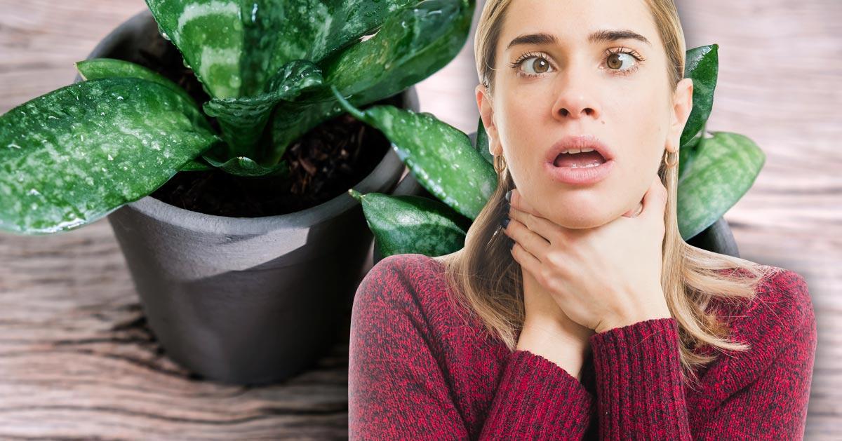 Mieszkasz w centrum miasta? Musisz mieć te trzy rośliny. Oczyszczą powietrze w domu!