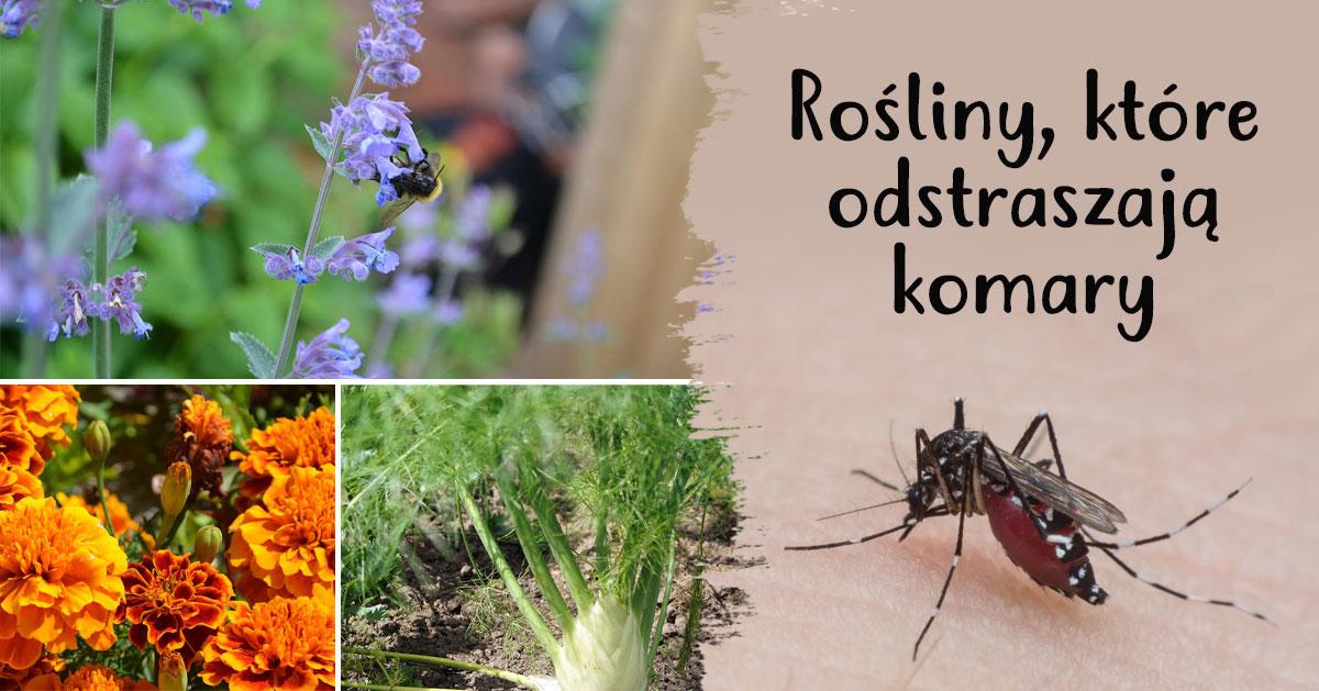 Rośliny, które odstraszają komary