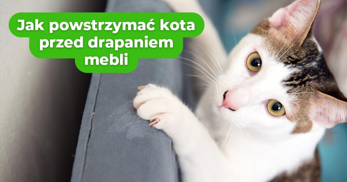 Jak powstrzymać kota przed drapaniem mebli