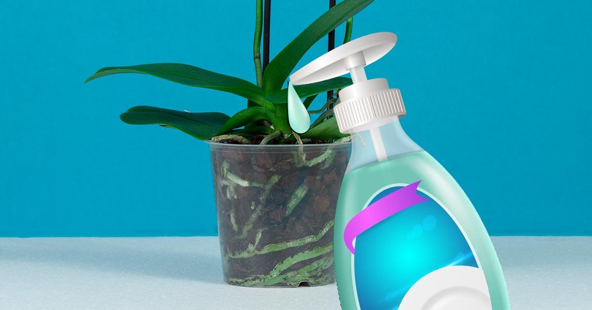 Wykorzystaj płyn do mycia naczyń by ożywić swoje storczyki!