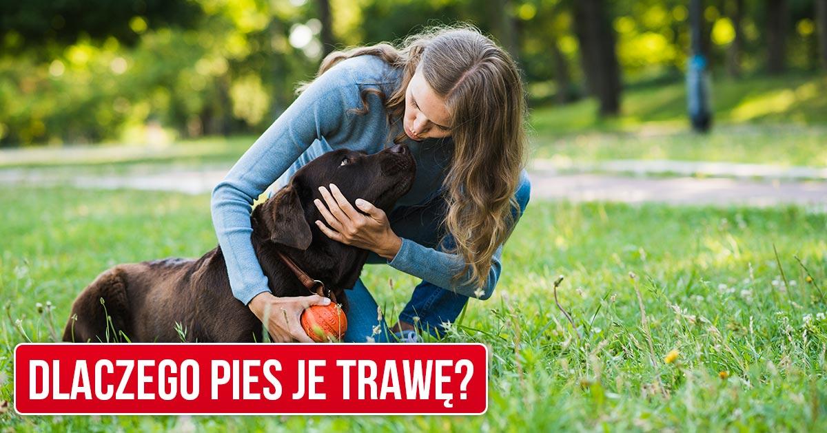Twój pies zjada trawę na spacerach? Zobacz dlaczego tak robi!