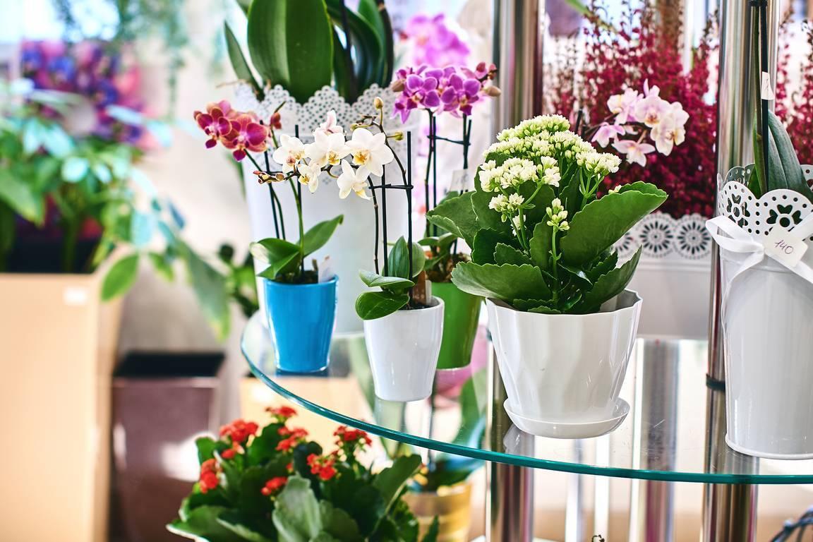 Kwiaty doniczkowe – sposoby na bujny wzrost
