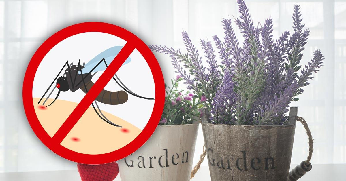 Te trzy rośliny odstraszają owady. Warto mieć je w domu!