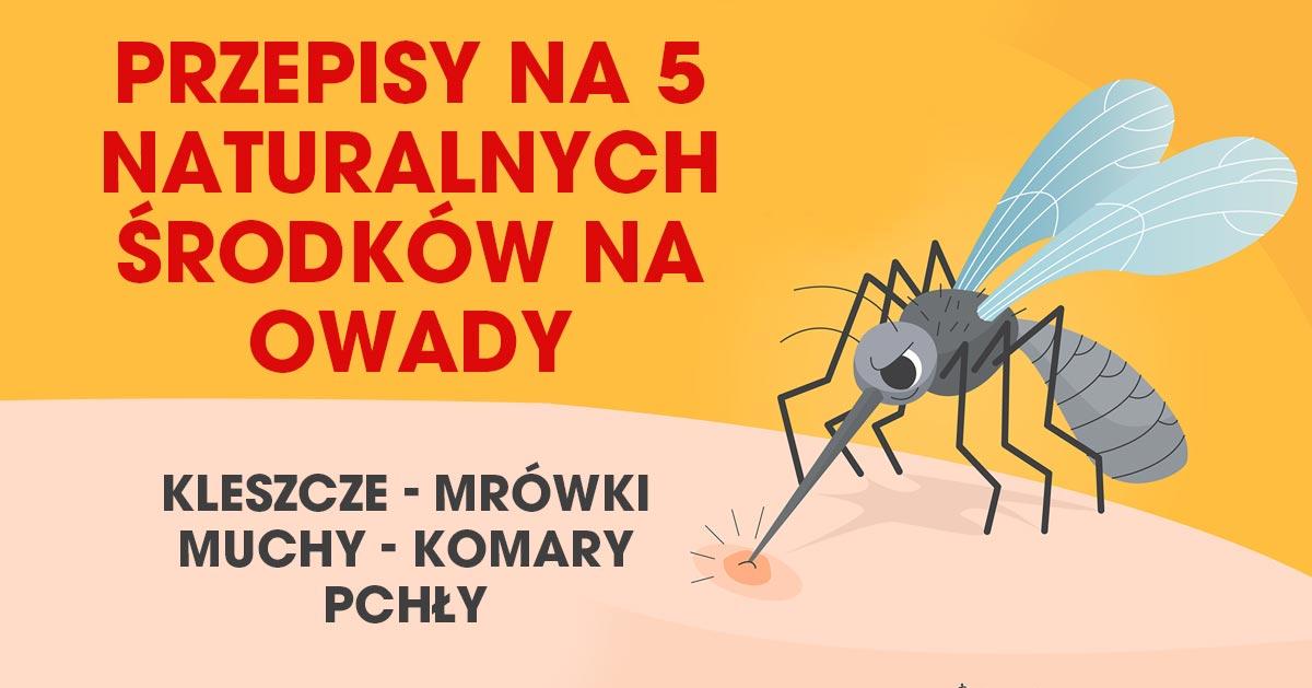 Przepisy na 5 naturalnych środków odstraszających owady