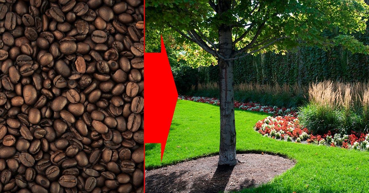 Rozrzuć kawę w swoim ogrodzie – zobacz dlaczego!