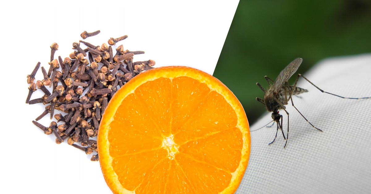 Jak za pomocą pomarańczy i goździków odpędzić komary?