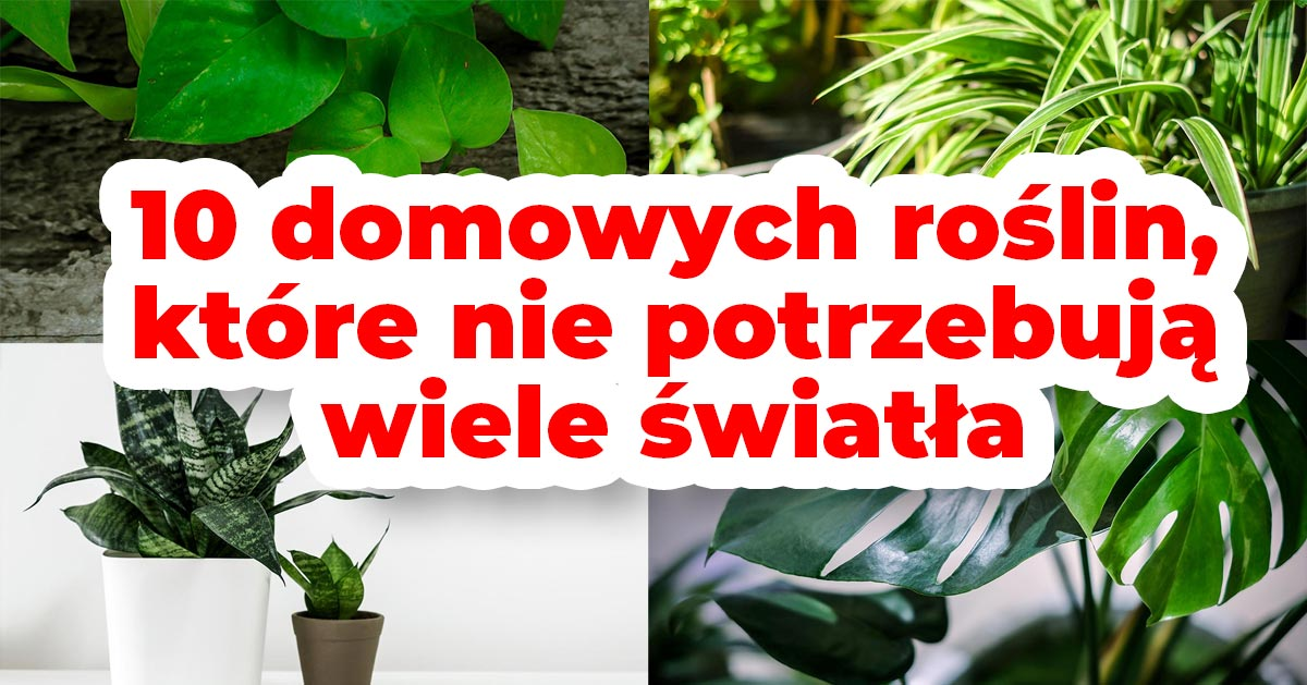 10 domowych roślin, które nie potrzebują wiele światła