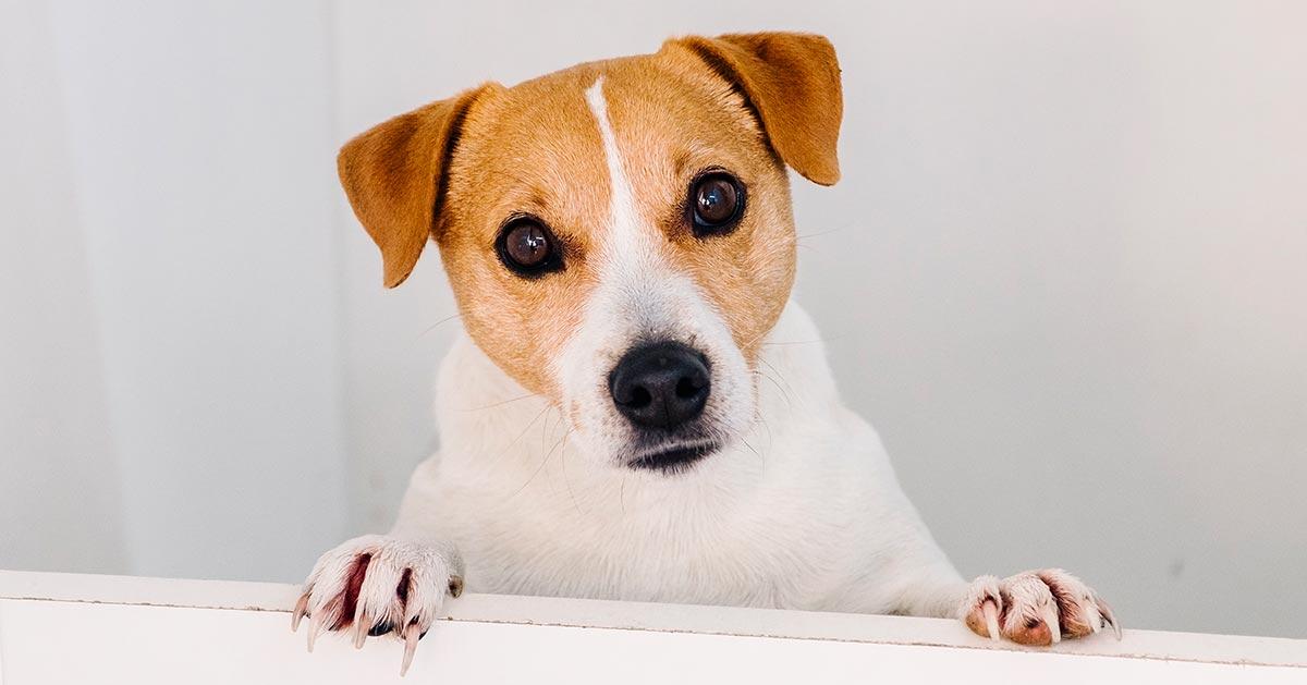 Twój pies przechyla głowę gdy do niego mówisz? Oto powód!