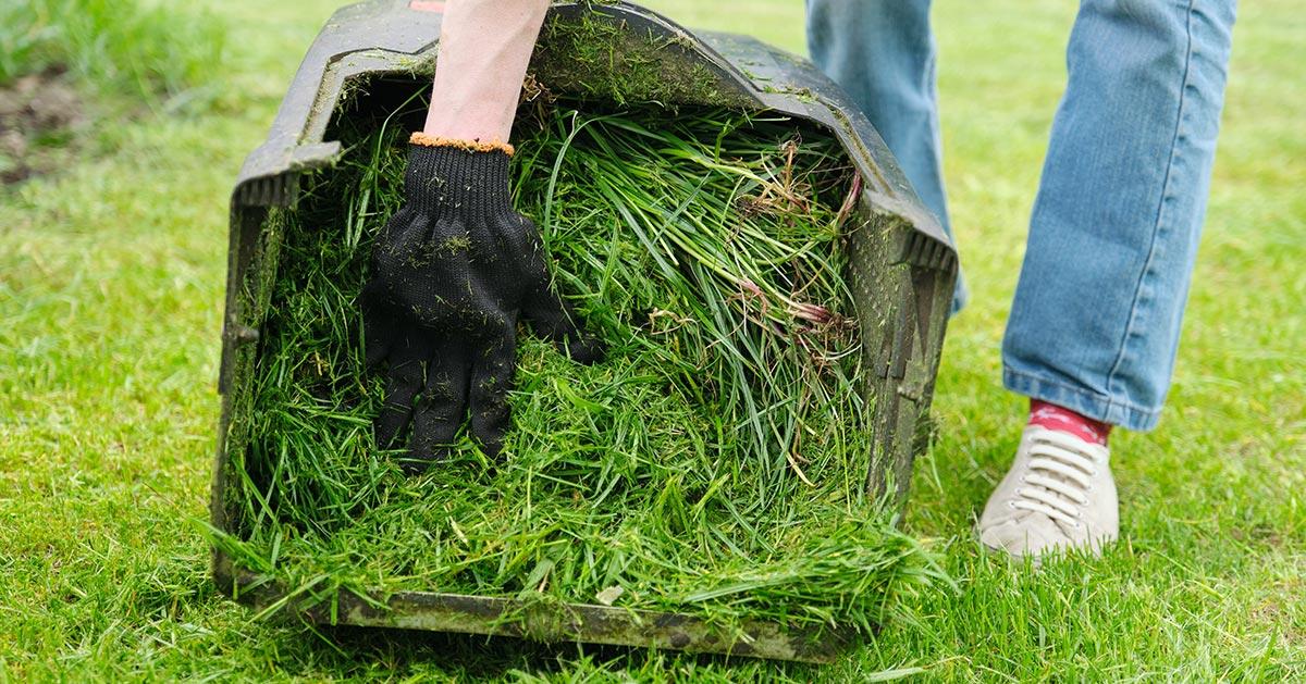 Zawsze grabisz trawnik po koszeniu? Nie rób tego jak i innych rzeczy, które zwykle robisz!