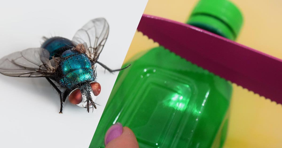 Pułapka na muchy – jak ją zrobić?