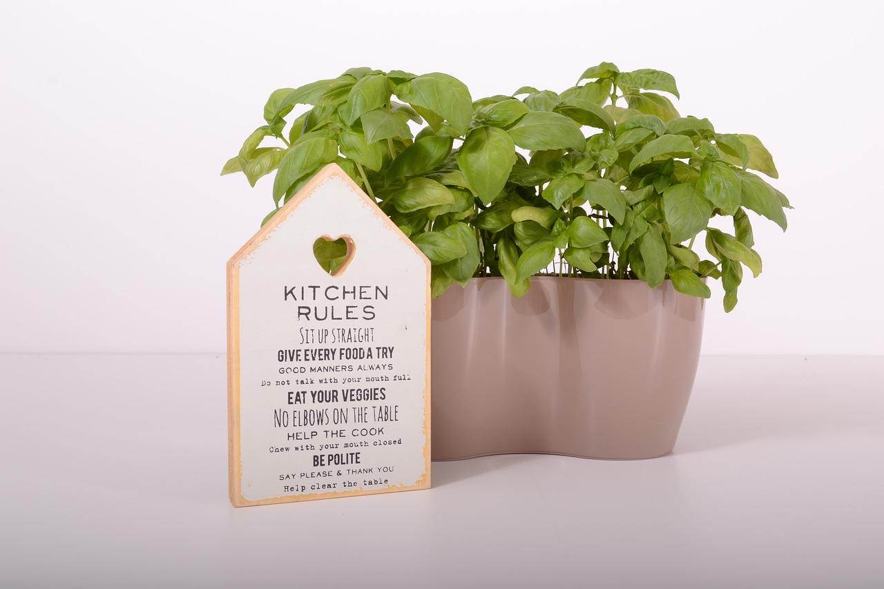 Jak sadzić rośliny?