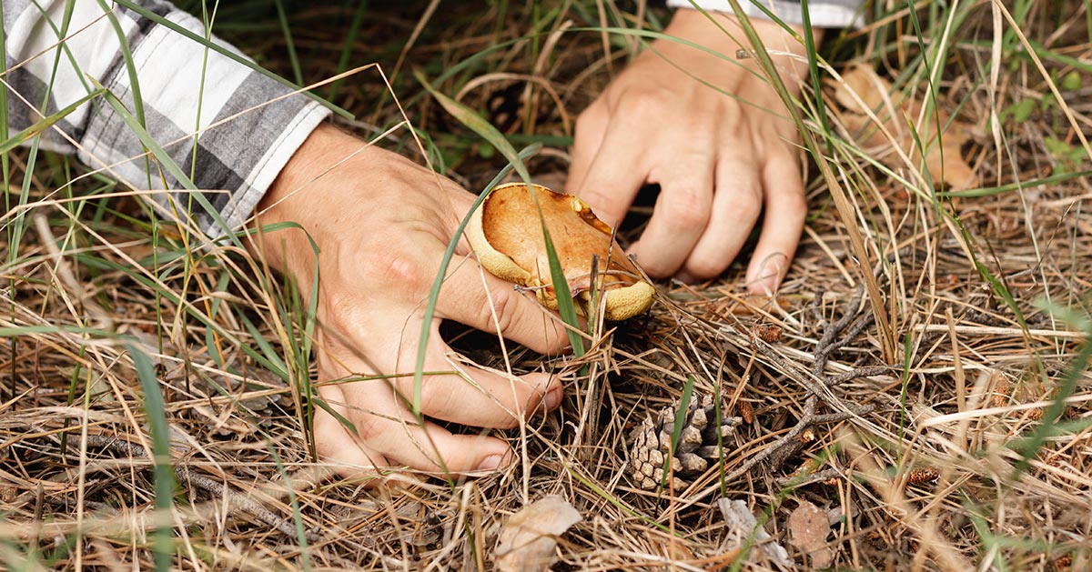 Nigdy nie rób tego wybierając się na grzyby!