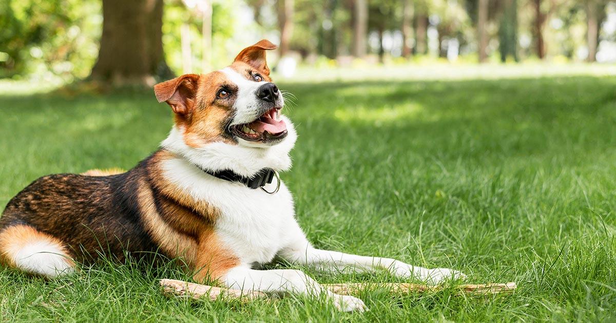 Ile wynosi kara za wypuszczenie psa na ulicę żeby sobie pobiegał?